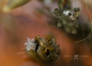 ...a single snowflake