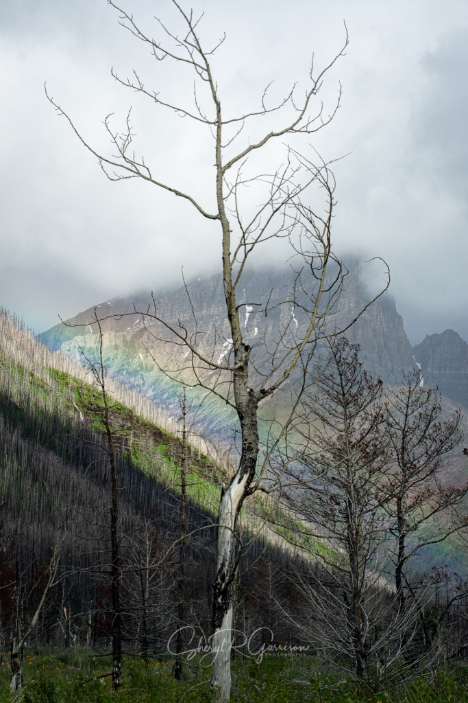 rainbow laying on one side of mountain