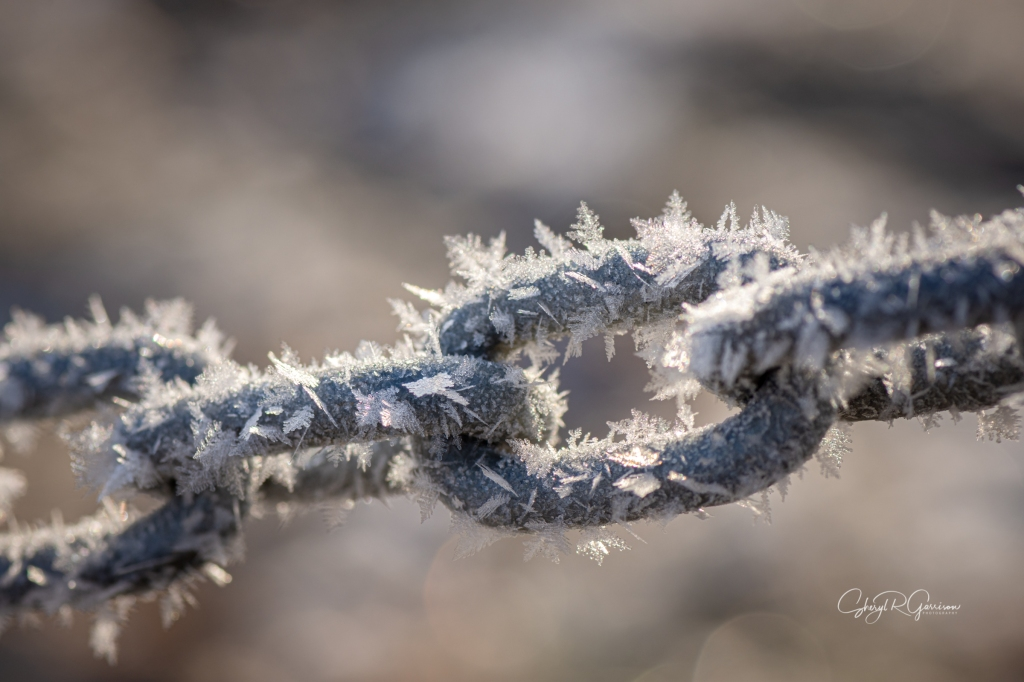 link of chain with soft rime feathers